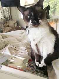 cat-post-pic-3